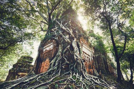 캄보디아에서 Siem Reap (앙코르 와트) 근처의 나무의 거대한 뿌리 아래에서 고대 기념물에 오는 배낭과 함께 젊은 남자