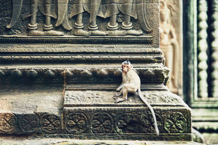 Cute little monkey sitting on the temple wall. Angkor Wat in Siem Reap, Cambodia Reklamní fotografie