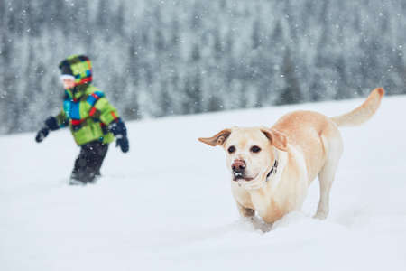Wintertime with dog in nature. Little boy playing with yellow labrador retriever in the snow.