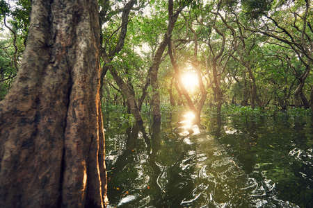 Flooded forest at the amazing sunset. Tone Sap Lake near Siem Reap in Cambodia.