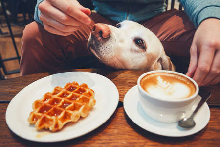 Young man with labrador retriever in the cafe. Curious dog under the table with sweet waffles and coffee.  Banco de Imagens