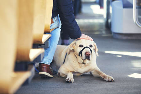 Young man travel with his dog by public transportation. Labrador retriever lying on the floor of the tram. Фото со стока