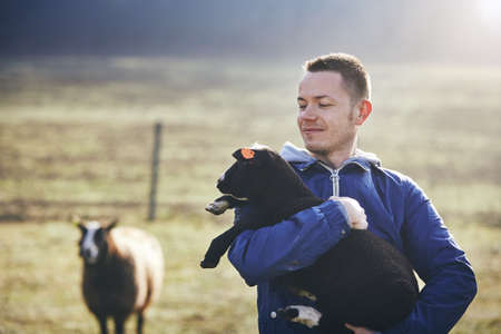 Sunny morning on the rural farm. Young farmer holding lamb against sheep and pasture. Stock Photo
