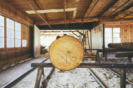 Lumber industry. Tree trunk prepared for cutting at the sawmill.  Banco de Imagens