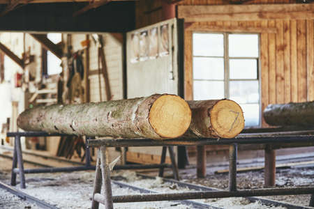 Industrie du bois. Troncs d'arbres préparés pour la coupe à la scierie.