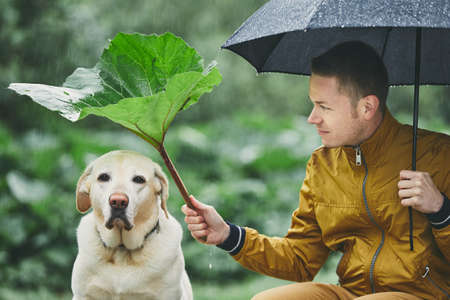 Rainy day with dog in nature. Young man with umbrella holding leaf of burdock above his sad labrador retriever. Archivio Fotografico - 101683658