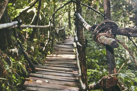Old elevated walkway through jungle. Rainforest in Sri Lanka.