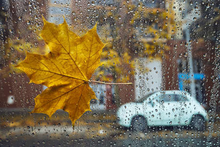 Autumn in the city. Fallen maple leaf and raindrops on a window of car against street.