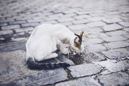 Abandoned cat drinking water from puddle on city street.