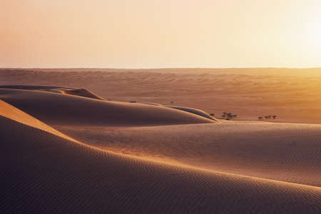 Sand dunes in desert landscape at sunset. Wahiba Sands, Sultanate of Oman.