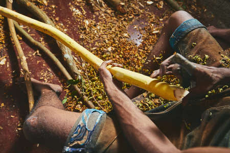 Hands of the man preparing cinnamon sticks. Manual worker in Sri Lanka.