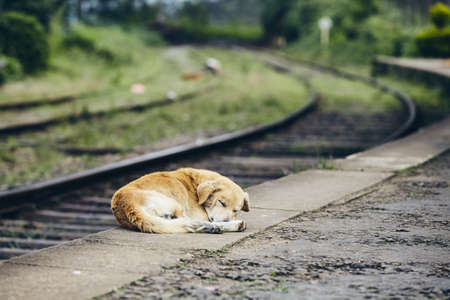 Tired dog sleeping on platform of train station. Themes loyalty, lost, hope and travel.