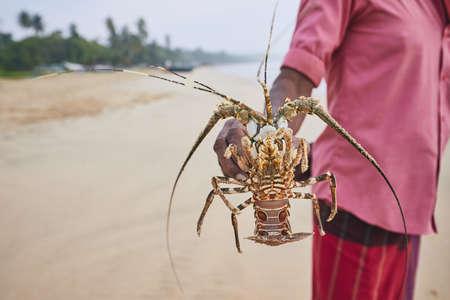 Fishing in Sri Lanka. Fisherman showing freshly caught lobster.