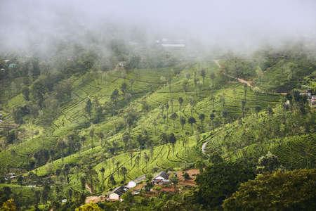 Tea plantations in clouds. Agriculture landscape near Haputale in Sri Lanka. Stok Fotoğraf