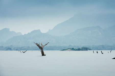 Dead tree sticking out of the water from lake. Gloomy day in Sri Lanka. Themes environment, global climate change or sadness. Stock Photo