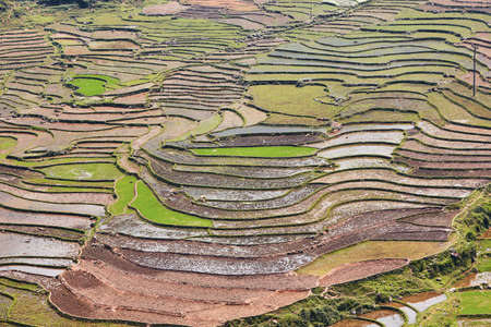 Pattern of nature. Rice terraced field at Sapa in Lao Cai province, Vietnam. Reklamní fotografie