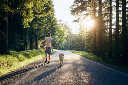 Summertime with dog. Man and his labrador retriever walking on road in forest against beautiful sunset.