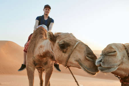 Camel riding in desert. Young man enjoying journey on sand dunes. Wahiba Sands in Sultanate of Oman
