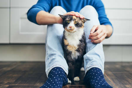 Domestic life with pet. Young man siiting on floor in home kitchen and stroking his cute cat. Stok Fotoğraf