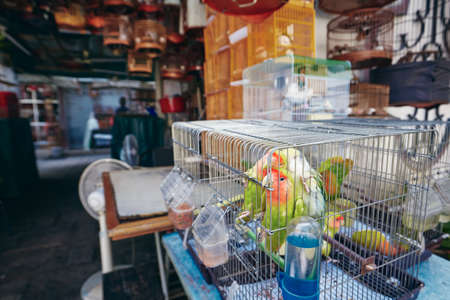 Bird street market. Parrots in cages for sale in Hong Kong.
