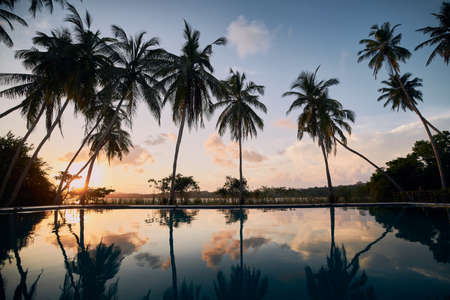 Reflection in water surface. Swimming pool in the middle of coconut palm trees against lagoon at sunset. 写真素材