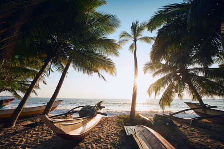 Traditional fishing boats under palm trees against sea. Tropical beach in Sri Lanka. 写真素材