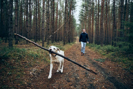 Man with dog on pathway in the middle of forest. Labrador retriever carrying stick in mouth.