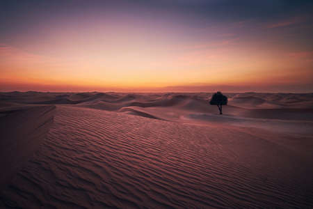Lonely tree in the middle of sand dunes. Desert landscape at beautiful dusk. Abu Dhabi, United Arab Emirates