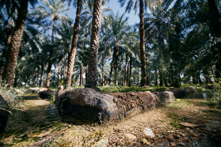 Watering cannal in the middle of oasis. Al Ain, The Emirate of Abu Dhabi.