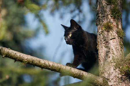 Low angle view of black cat with yellow eyes on tree. Themes timidity, exploration and lost animals.