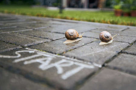 Close-up of racing snails behind start line. Themes competition, winning and funny animals.