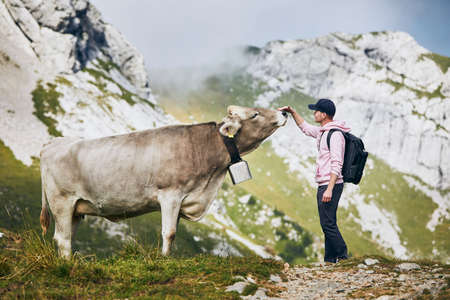 Young man stroking swiss cow on mountain footpath. Mount Pilatus, Lucerne, Switzerland.