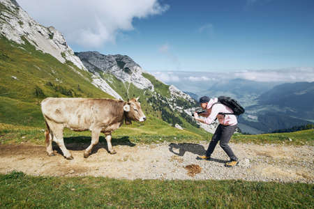 Young man photographing swiss cow on mountain footpath. Mount Pilatus, Lucerne, Switzerland.