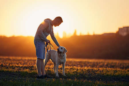 Man with dog at beautiful sunset. Pet owner stroking his cute labrador retriever on footpath against field.
