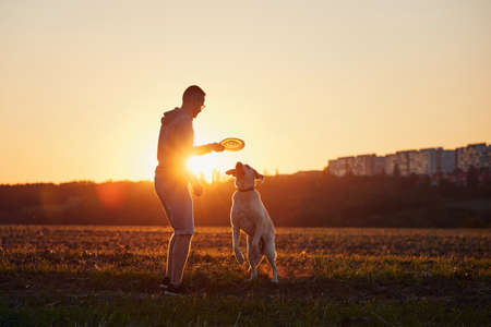 Man throwing flying disc for his dog. Pet owner with labrador retriver on field at beautiful sunset. Stockfoto