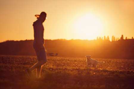 Man throwing flying disc for his dog. Pet owner with labrador retriver on field during walk at beautiful sunset. Stockfoto