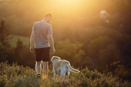 Man with dog on meadow at sunset. Pet owner walking with his cute labrador retriever in grass. Stockfoto