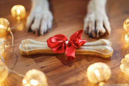 Holiday celebration at home. Bone with red ribbon as Christmas gift for dog.