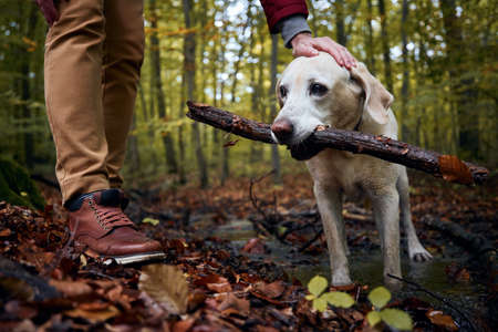 Man with dog in autumn forest. Pet owner stroking his labrador retriever.