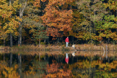 Young man with dog in autumn nature. Pet owner with his labrador retriever are looking at lake against colorful forest.