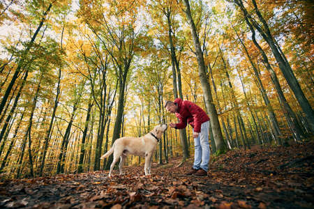Man with dog autumn forest. Pet owner holding cookie for his cute labrador retriever.