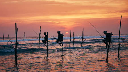 Silhouettes of three fishermen at beautiful sunset. Traditional stilt fishing in Sri Lanka.