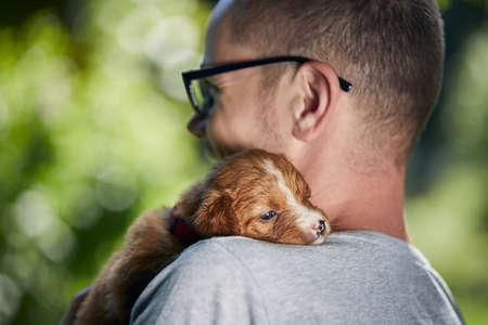 Man holding cute puppy on shoulder. Nova Scotia Duck Tolling Retriever looking at camera