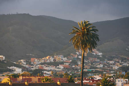 Palm tree against city San Cristobal de La Laguna. Tenerife, Canary Islands, Spain.