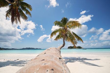 Palm tree on white sand beach. Idyllic day in tropical travel destination. Praslin Island, Seychelles.