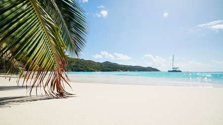 Palm leaves on beautiful white sand beach with turquoise sea. Anse Lazio in Seychelles.
