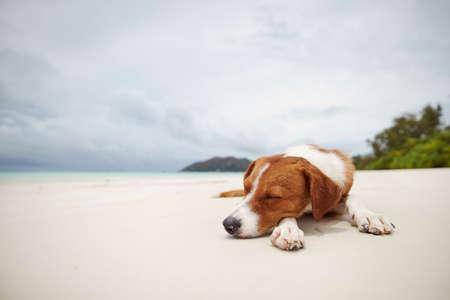 Cute dog sleeping on beautiful white sand beach against sea.