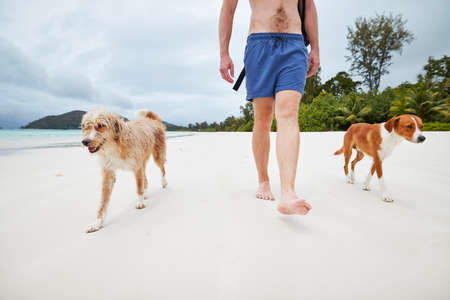 Low section of young man walking on white sand beach with cute dogs.
