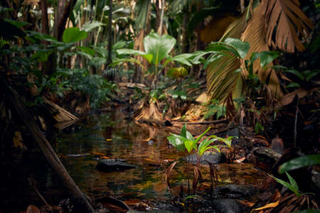 Stream in the middle of jungle. Tropical rainforest in Seychelles. Stock fotó