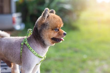 Dog Stock Photo - 86197237